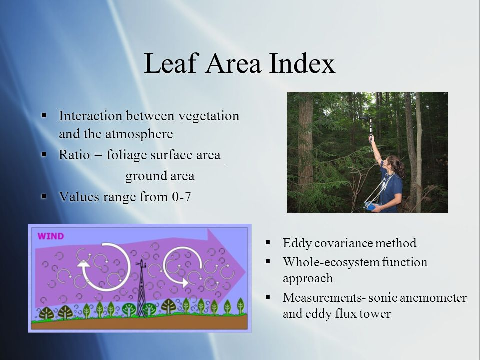Leaf Area Index  Interaction between vegetation and the atmosphere  Ratio = foliage surface area ground area  Values range from 0-7  Interaction b