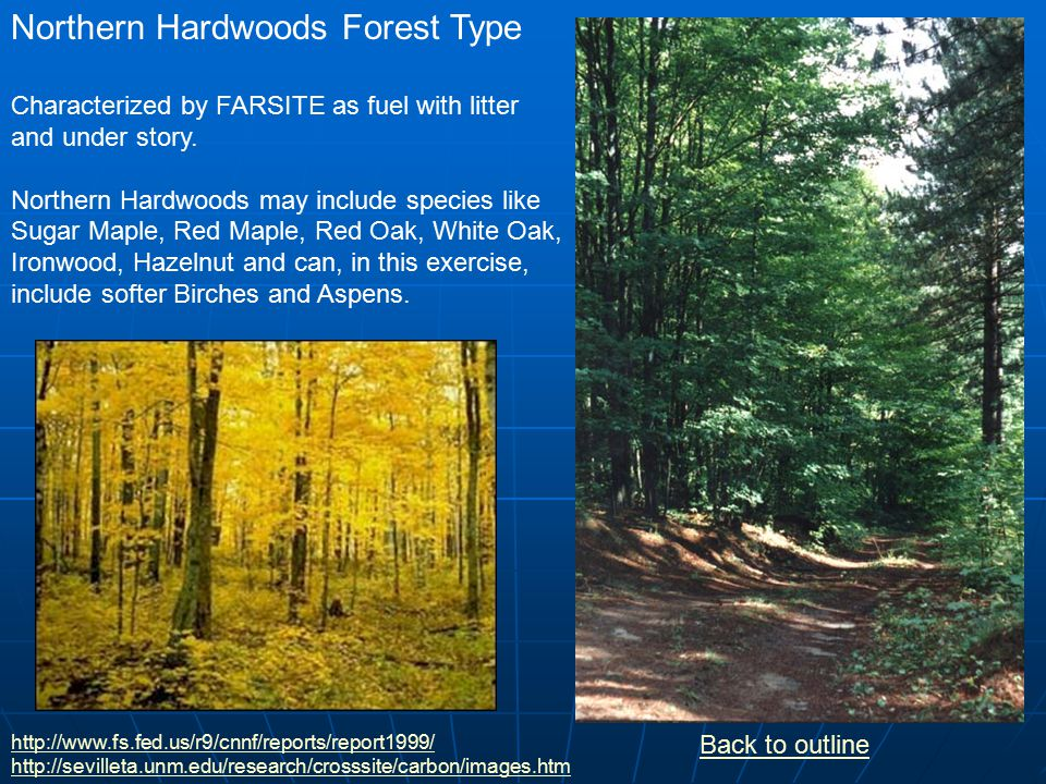 Northern Hardwoods: Choose the harvest pattern and amount and the level of rain desired.