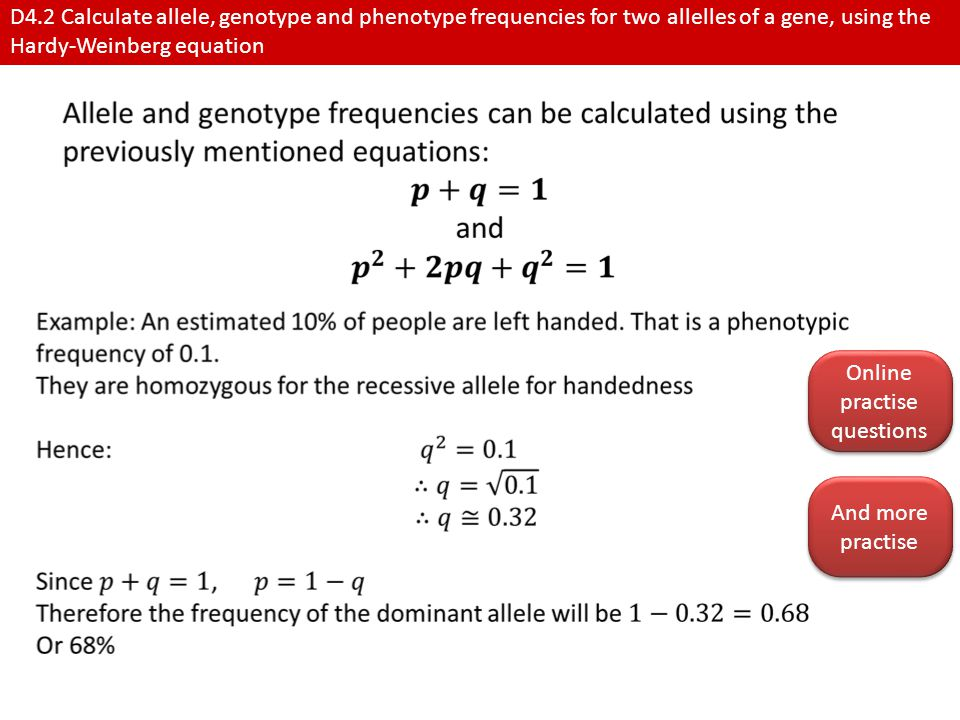 D4.2 Calculate allele, genotype and phenotype frequencies for two allelles of a gene, using the Hardy-Weinberg equation Online practise questions Online practise questions And more practise And more practise