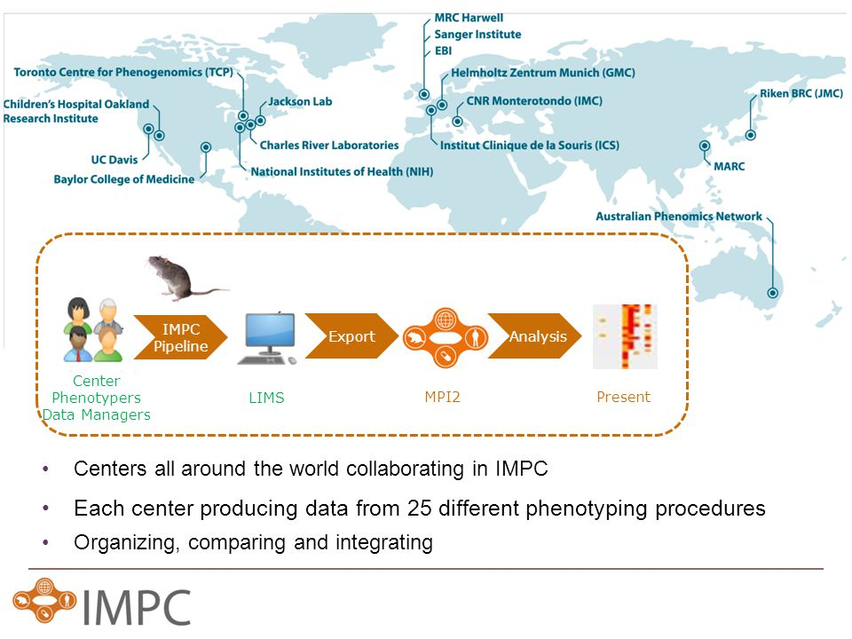 Centers all around the world collaborating in IMPC Center Phenotypers Data Managers LIMS IMPC Pipeline Each center producing data from 25 different phenotyping procedures Organizing, comparing and integrating MPI2Present Export Analysis