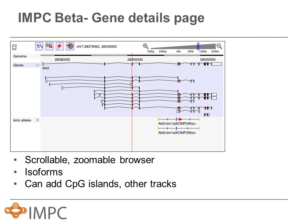 IMPC Beta- Gene details page Scrollable, zoomable browser Isoforms Can add CpG islands, other tracks