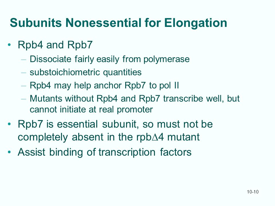 10-10 Subunits Nonessential for Elongation Rpb4 and Rpb7 –Dissociate fairly easily from polymerase –substoichiometric quantities –Rpb4 may help anchor Rpb7 to pol II –Mutants without Rpb4 and Rpb7 transcribe well, but cannot initiate at real promoter Rpb7 is essential subunit, so must not be completely absent in the rpb  4 mutant Assist binding of transcription factors