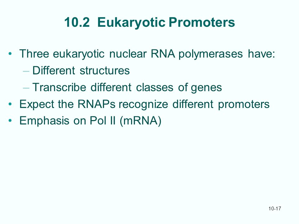 10-17 10.2 Eukaryotic Promoters Three eukaryotic nuclear RNA polymerases have: –Different structures –Transcribe different classes of genes Expect the RNAPs recognize different promoters Emphasis on Pol II (mRNA)