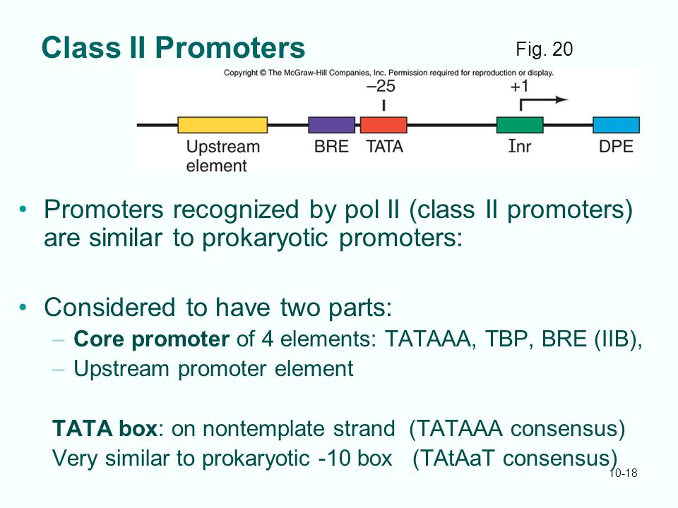 10-18 Class II Promoters Promoters recognized by pol II (class II promoters) are similar to prokaryotic promoters: Considered to have two parts: –Core promoter of 4 elements: TATAAA, TBP, BRE (IIB), –Upstream promoter element TATA box: on nontemplate strand (TATAAA consensus) Very similar to prokaryotic -10 box (TAtAaT consensus) Fig.