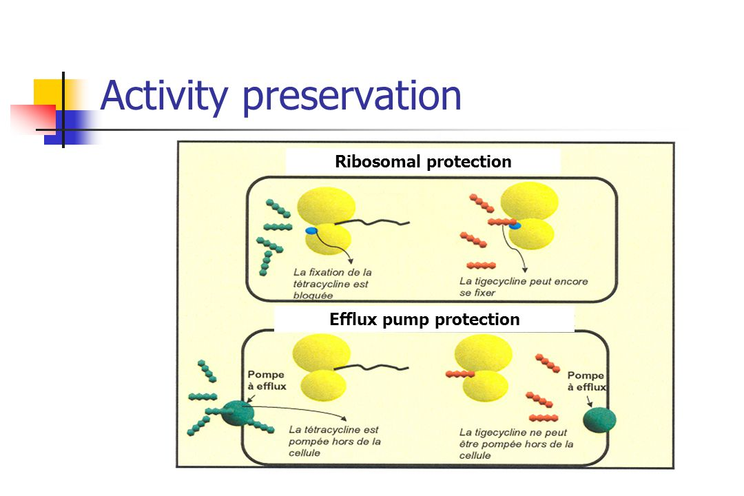 Activity preservation Ribosomal protection Efflux pump protection