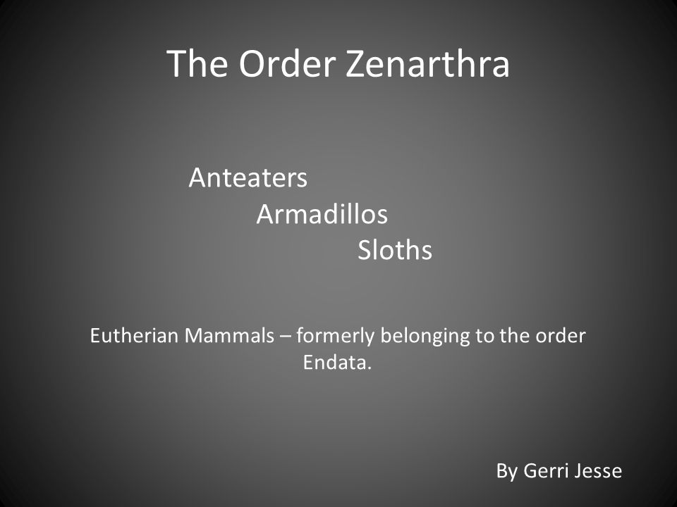 Members of the mammalian order Edentata include:  31 living species of armadillos, true anteaters, and tree sloths.