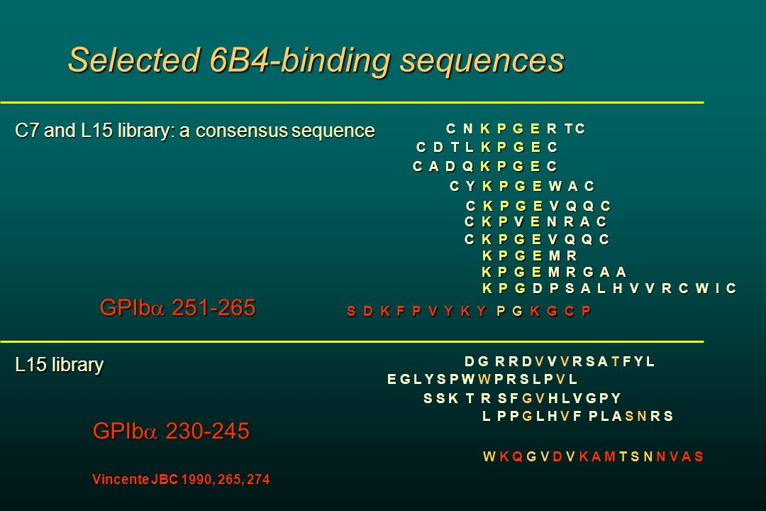 Selected 6B4-binding sequences C7 and L15 library: a consensus sequence C N K P G E R T C C N K P G E R T C C D T L K P G E C C A D Q K P G E C C K P G E V Q Q C C Y K P G E W A C C K P V E N R A C C K P G E V Q Q C K P G E M R K P G E M R K P G E M R G A A K P G E M R G A A K P G D P S A L H V V R C W I C K P G D P S A L H V V R C W I C D G R R D V V V R S A T F Y L E G L Y S P W W P R S L P V L S S K T R S F G V H L V G P Y L P P G L H V F P L A S N R S S D K F P V Y K Y P G K G C P GPIb  251-265 W K Q G V D V K A M T S N N V A S GPIb  230-245 Vincente JBC 1990, 265, 274 L15 library