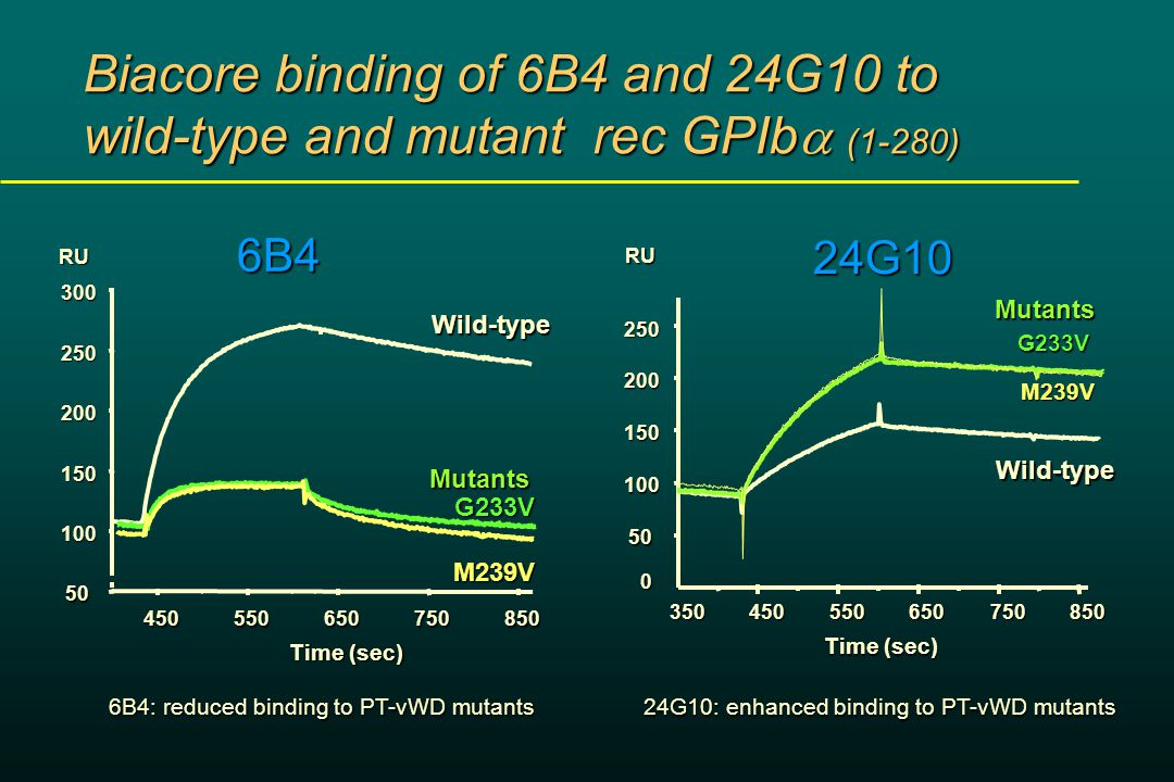 Biacore binding of 6B4 and 24G10 to wild-type and mutant rec GPIb  (1-280) 6B RU Time (sec) Wild-type M239V G233VMutants 6B4: reduced binding to PT-vWD mutants RU Time (sec) 24G10Wild-type M239V G233V Mutants 24G10: enhanced binding to PT-vWD mutants