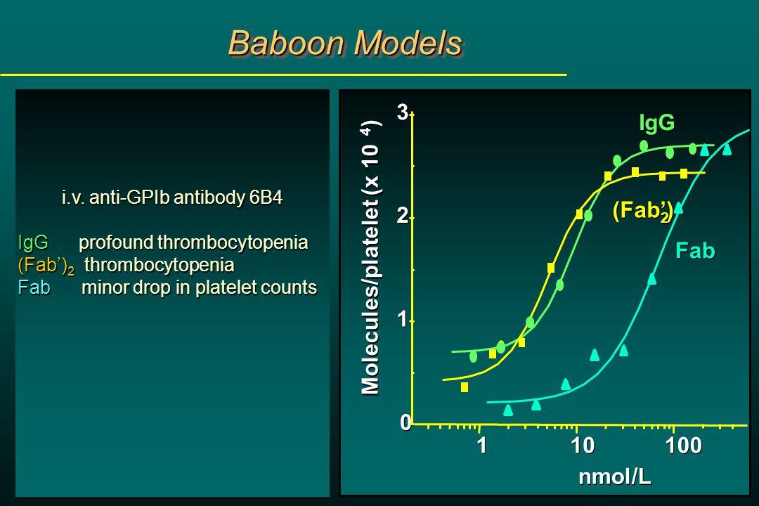 Baboon Models i.v.
