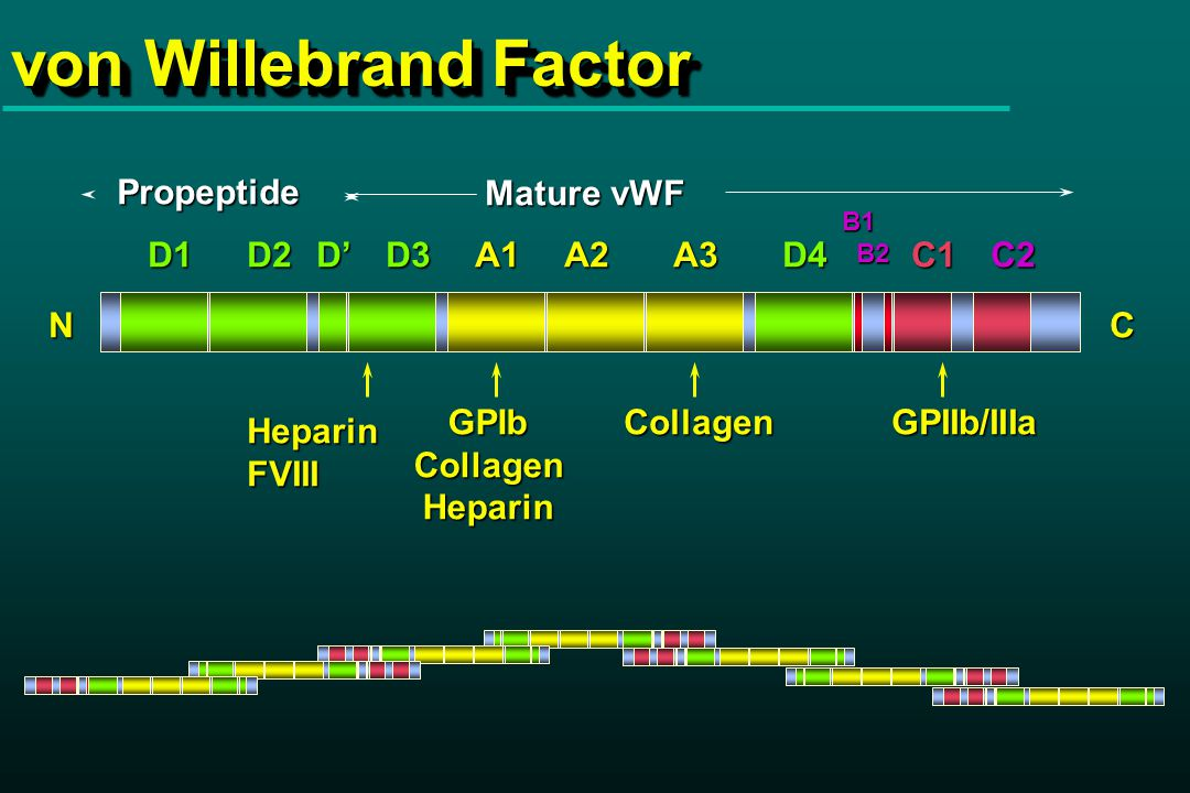 Static: Inhibition of vWF - GPIb interaction in ELISA by anti-GPIb MoAbs