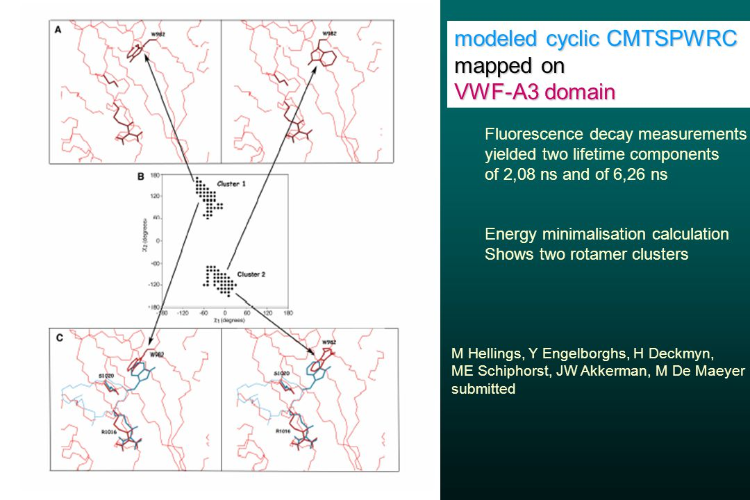 modeled cyclic CMTSPWRC mapped on VWF-A3 domain Fluorescence decay measurements yielded two lifetime components of 2,08 ns and of 6,26 ns Energy minimalisation calculation Shows two rotamer clusters M Hellings, Y Engelborghs, H Deckmyn, ME Schiphorst, JW Akkerman, M De Maeyer submitted