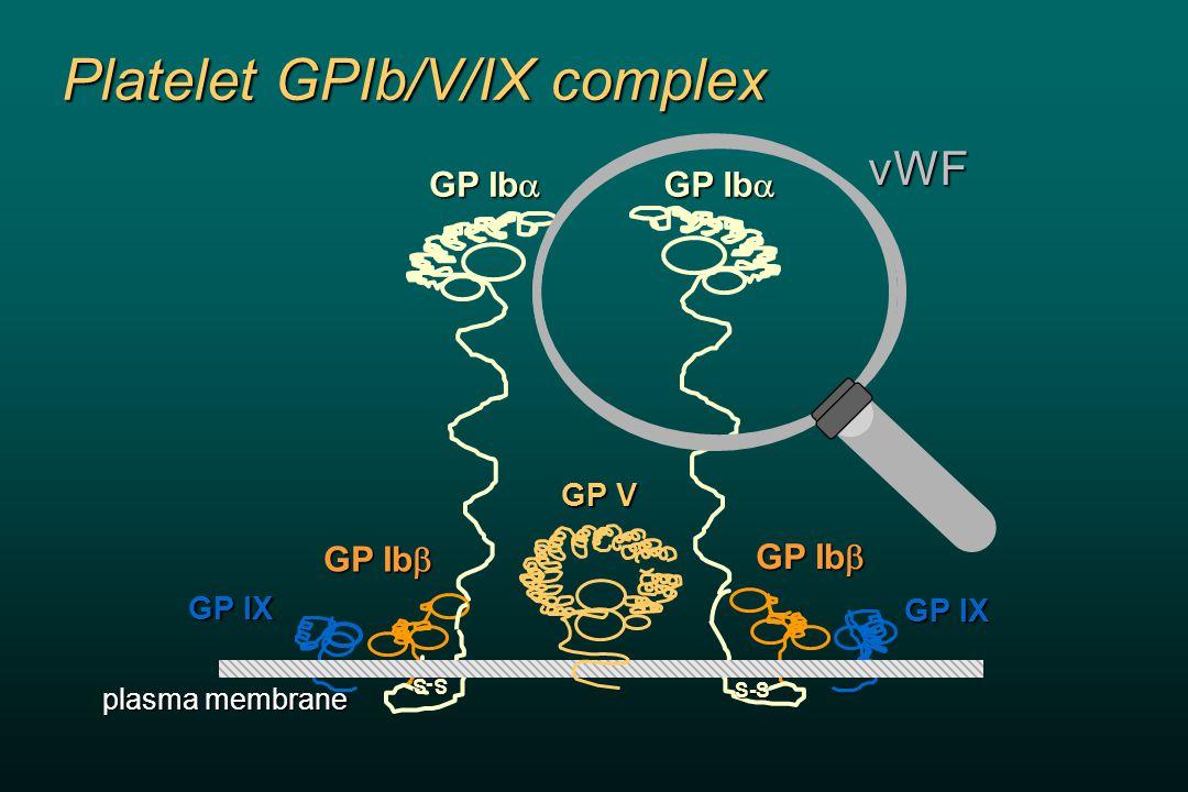 Platelet GPIb/V/IX complex GP Ib  GP V GP IX GP Ib  GP Ib  plasma membrane vWFS-S S-S