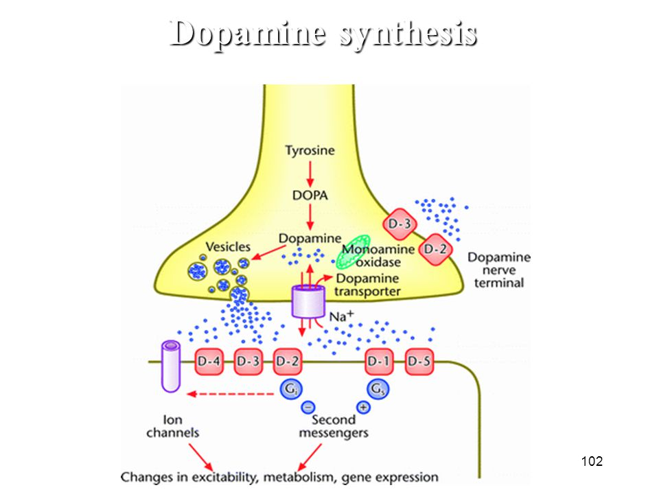 Dopamine synthesis 102