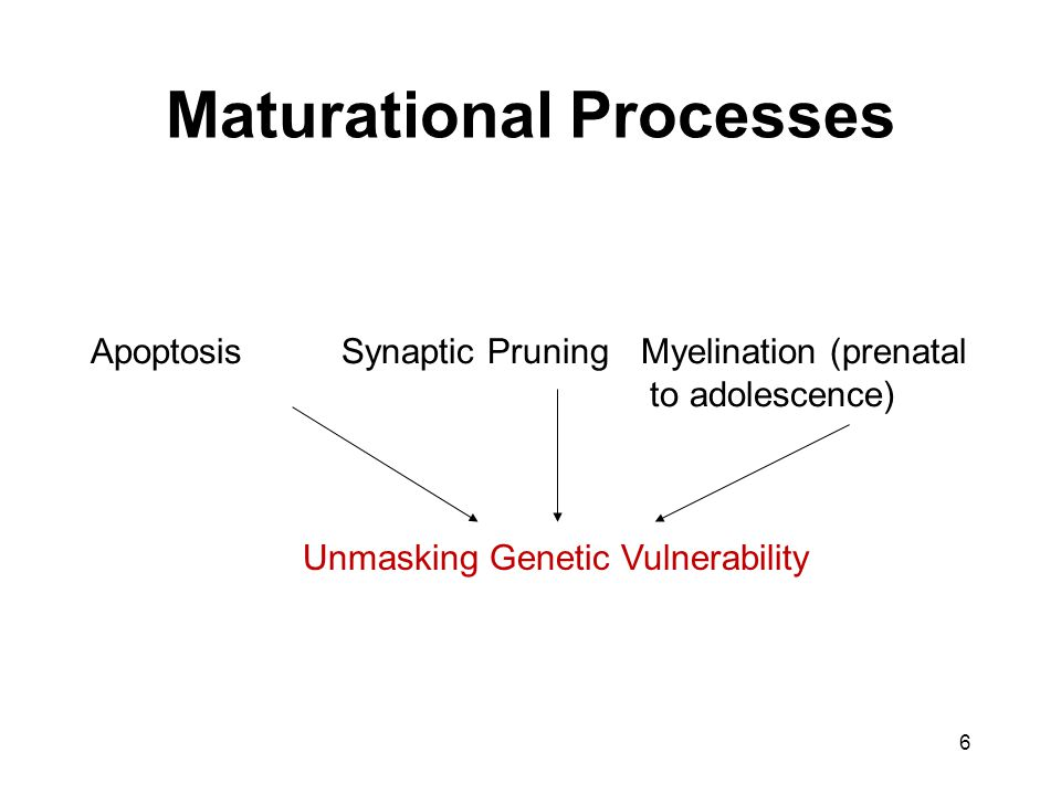 Maturational Processes Apoptosis Synaptic Pruning Myelination (prenatal to adolescence) Unmasking Genetic Vulnerability 6