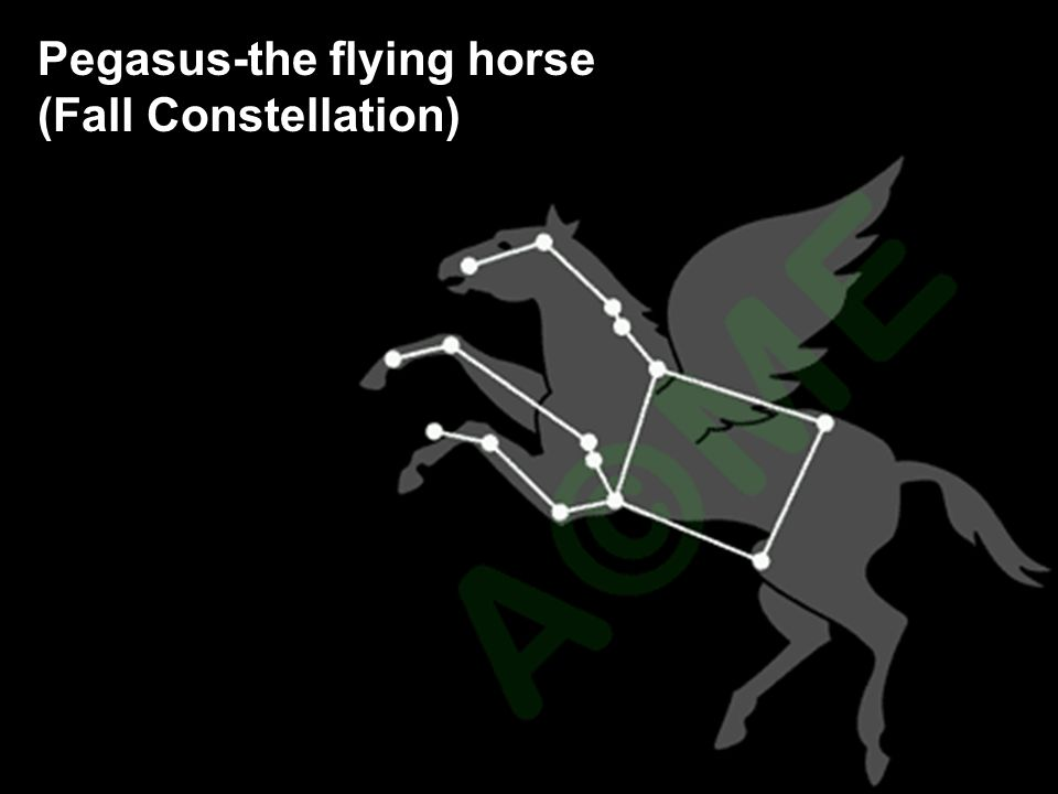 Pegasus-the flying horse (Fall Constellation)