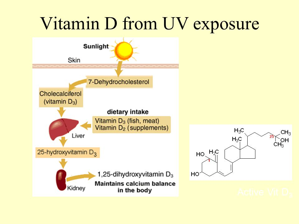 Vitamin D from UV exposure Active Vit D 3