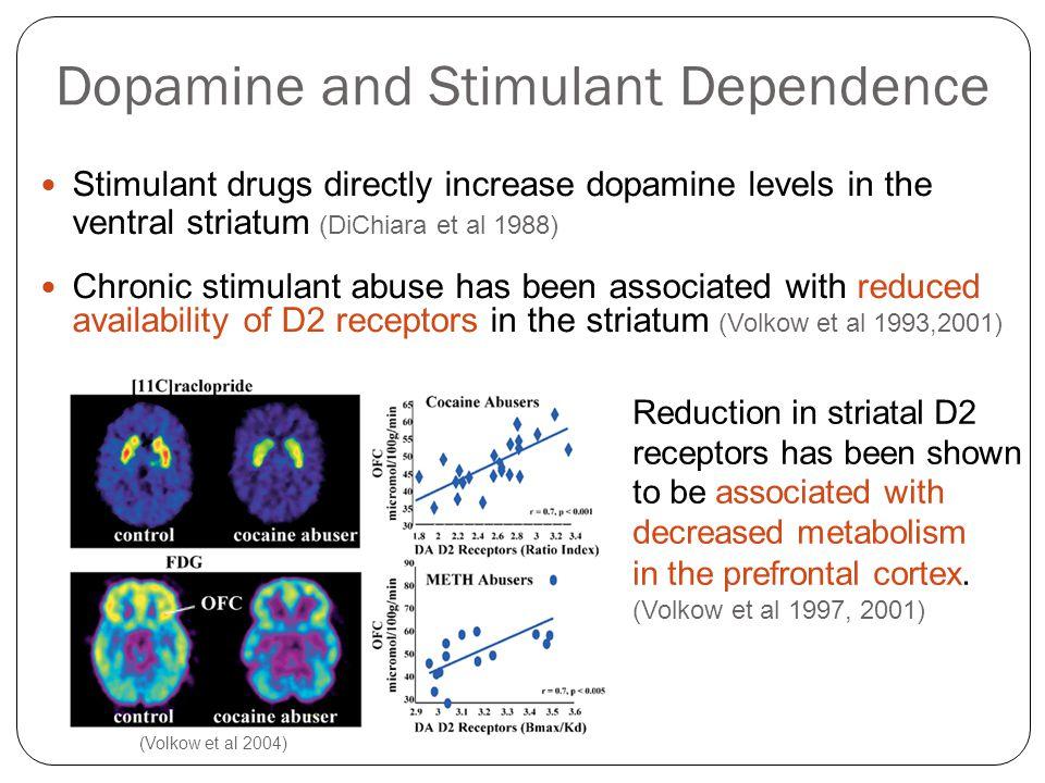Dopamine and Stimulant Dependence Stimulant drugs directly increase dopamine levels in the ventral striatum (DiChiara et al 1988) Chronic stimulant ab