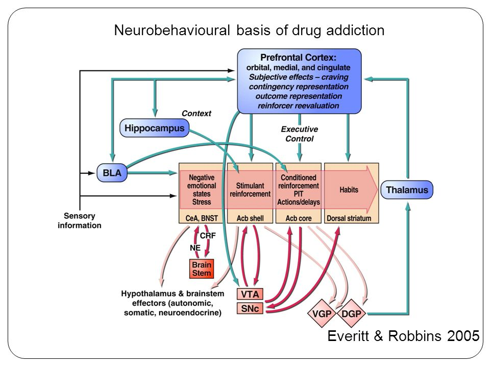 Everitt & Robbins 2005 Neurobehavioural basis of drug addiction