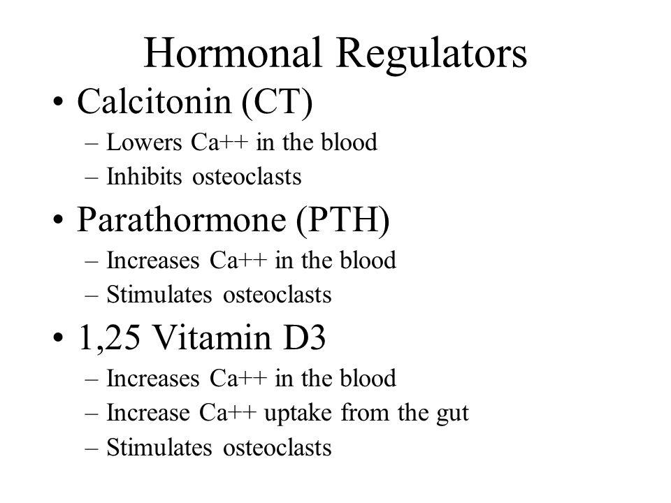 Hormonal Regulators Calcitonin (CT) –Lowers Ca++ in the blood –Inhibits osteoclasts Parathormone (PTH) –Increases Ca++ in the blood –Stimulates osteoc