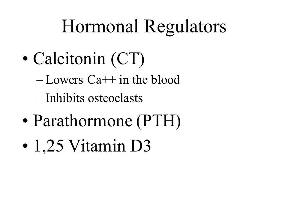 Hormonal Regulators Calcitonin (CT) –Lowers Ca++ in the blood –Inhibits osteoclasts Parathormone (PTH) 1,25 Vitamin D3
