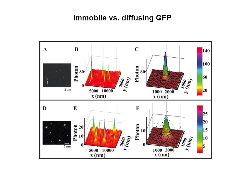 Immobile vs. diffusing GFP 500 nm