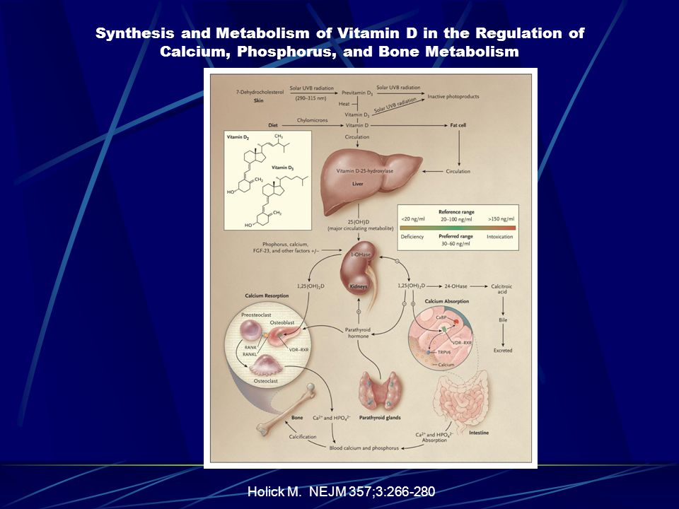 Holick M. NEJM 357;3:266-280 Synthesis and Metabolism of Vitamin D in the Regulation of Calcium, Phosphorus, and Bone Metabolism