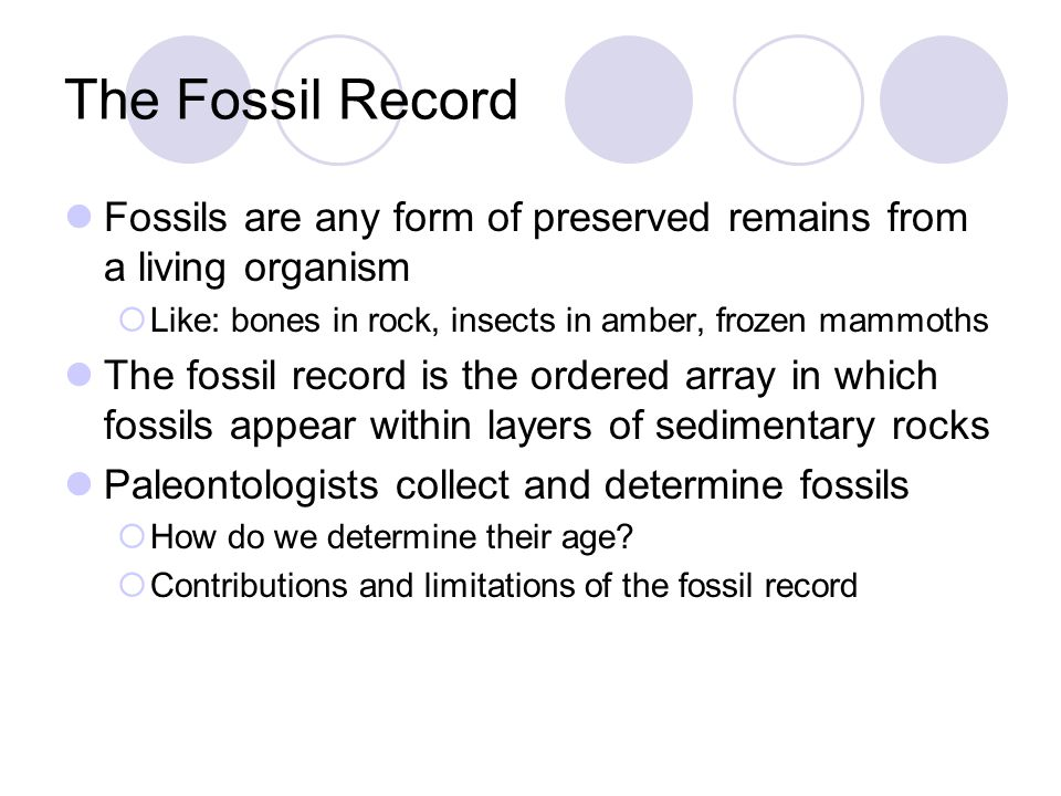 The Fossil Record Fossils are any form of preserved remains from a living organism  Like: bones in rock, insects in amber, frozen mammoths The fossil