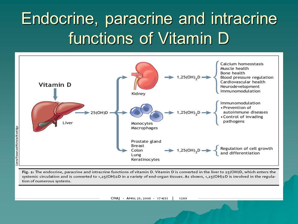 Vitamin D Across the Lifespan  Factors influencing accumulation of bone minerals: –Heredity –Gender –Diet –Physical activity –Endocrine status –Maternal vitamin D status