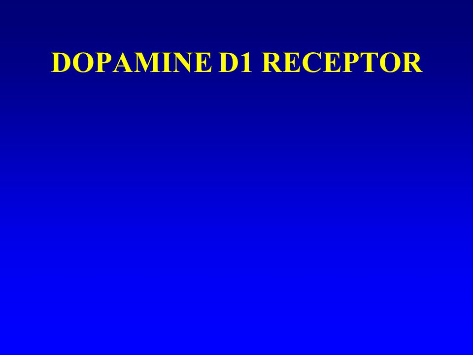 DOPAMINE D1 RECEPTOR