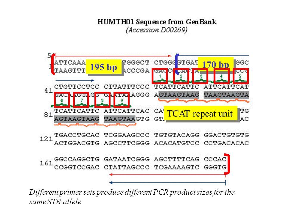 170 bp 195 bp Different primer sets produce different PCR product sizes for the same STR allele TCAT repeat unit