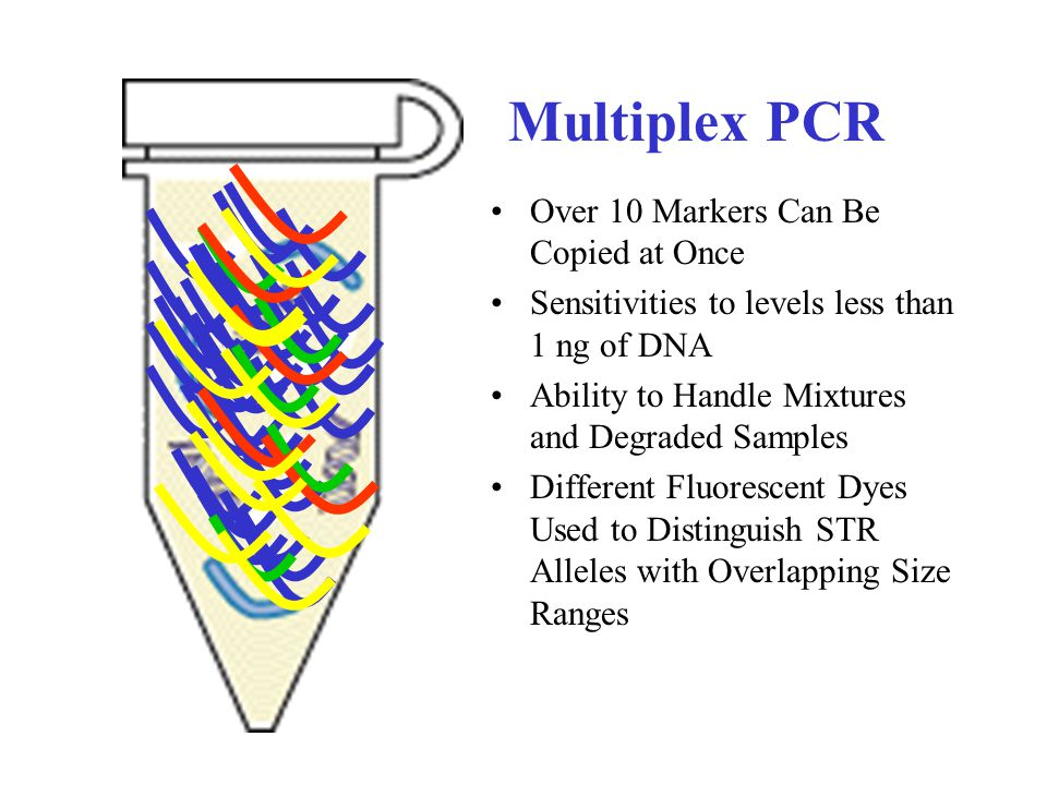 Multiplex PCR Over 10 Markers Can Be Copied at Once Sensitivities to levels less than 1 ng of DNA Ability to Handle Mixtures and Degraded Samples Diff