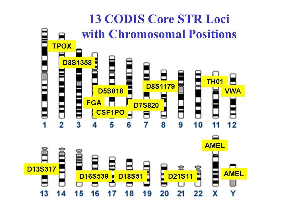 13 CODIS Core STR Loci with Chromosomal Positions CSF1PO D5S818 D21S11 TH01 TPOX D13S317 D7S820 D16S539D18S51 D8S1179 D3S1358 FGA VWA AMEL