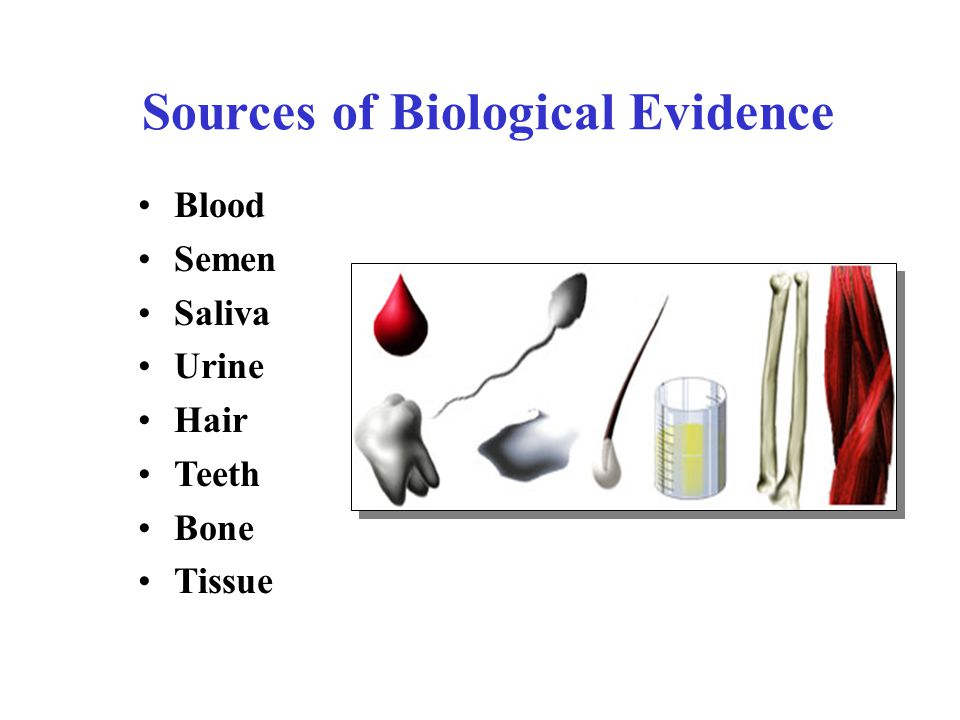 Sources of Biological Evidence Blood Semen Saliva Urine Hair Teeth Bone Tissue