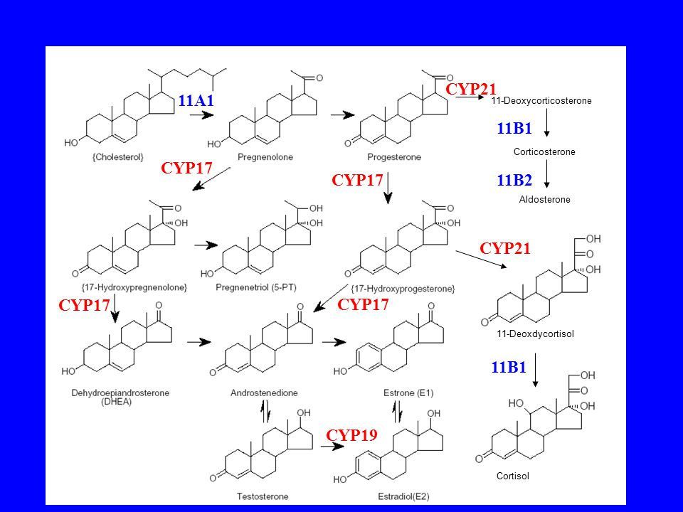 Cortisol 11-Deoxdycortisol 11-Deoxycorticosterone Corticosterone Aldosterone 11A1 CYP17 CYP19 11B1 CYP21 11B1 11B2CYP17
