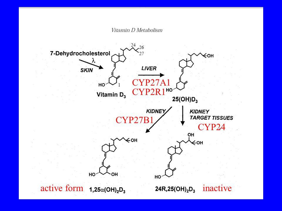 CYP27A1 CYP27B1 active form CYP24 inactive 24 26 27 1 CYP2R1