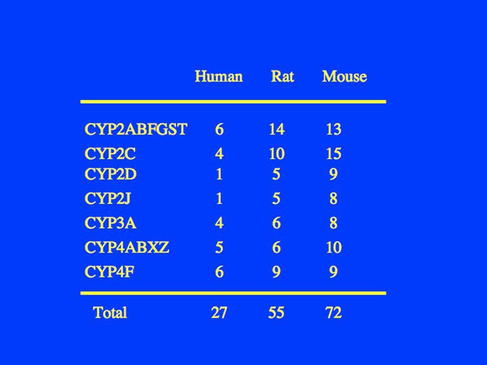 Human Rat Mouse CYP2ABFGST CYP2C CYP2J CYP3A CYP4ABXZ CYP4F Total 6 14 13 1 5 9 1 5 8 4 6 8 5 6 10 6 9 9 27 55 72 4 10 15 CYP2D