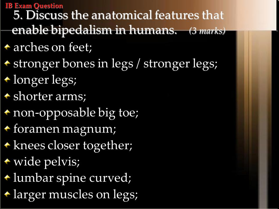 5.Discuss the anatomical features that enable bipedalism in humans.