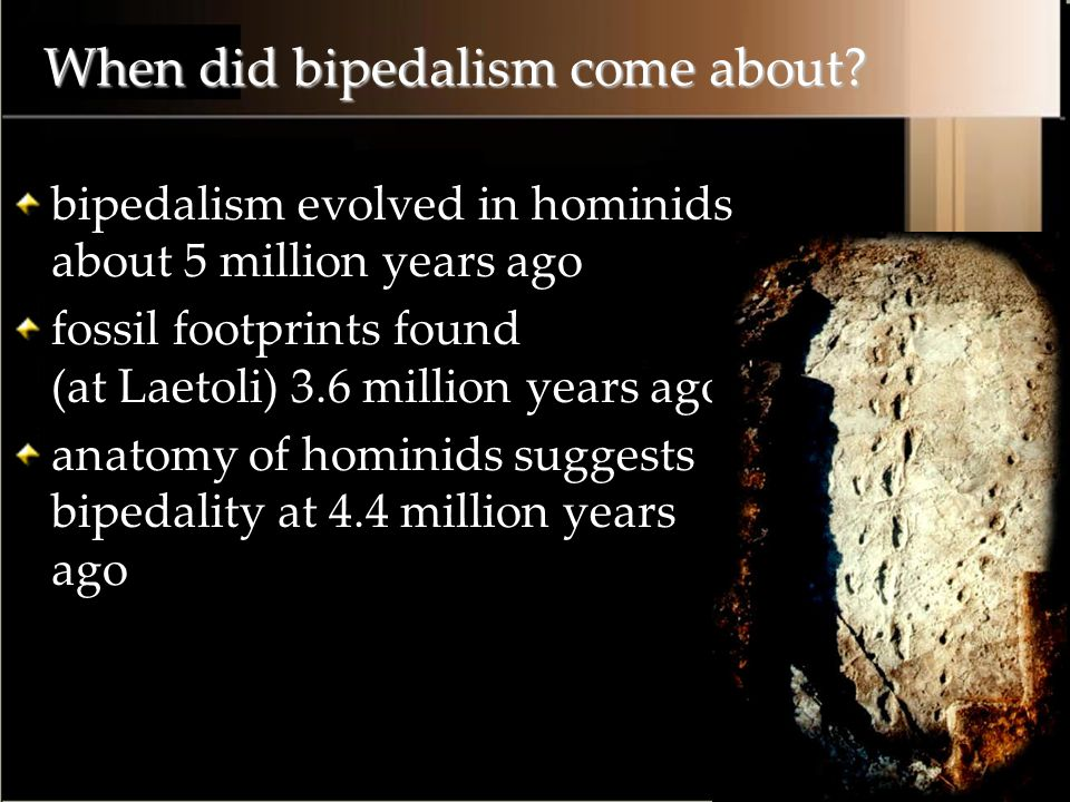 When did bipedalism come about.
