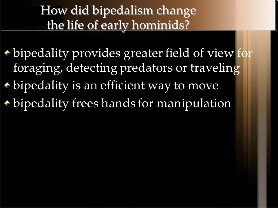 How did bipedalism change the life of early hominids? bipedality provides greater field of view for foraging, detecting predators or traveling bipedal