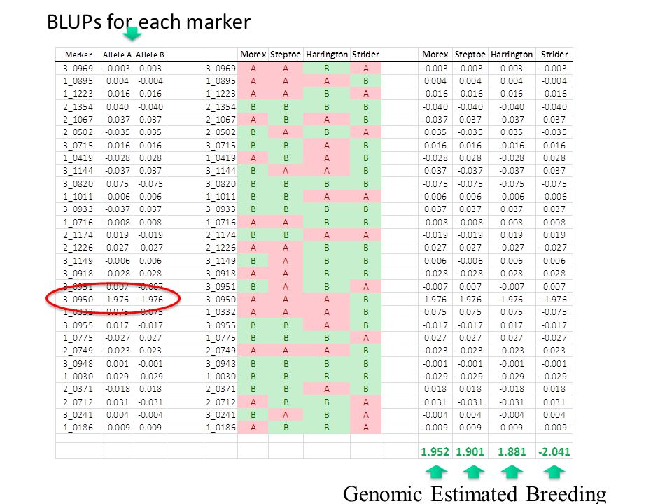 BLUPs for each marker Genomic Estimated Breeding Value (GEBV):