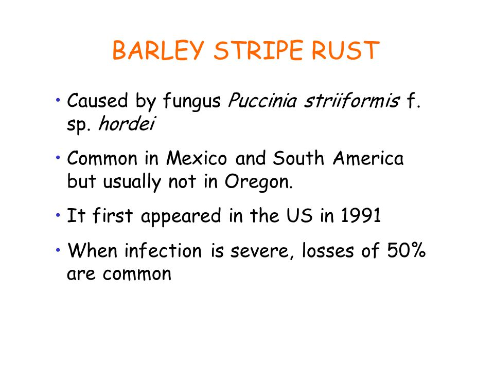 BARLEY STRIPE RUST Caused by fungus Puccinia striiformis f.