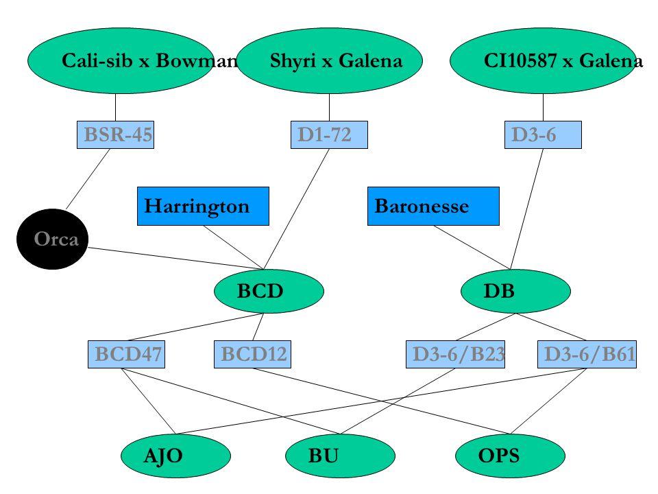 Cali-sib x BowmanShyri x GalenaCI10587 x Galena BSR-45D1-72D3-6 HarringtonBaronesse Orca BCDDB BCD47BCD12D3-6/B23D3-6/B61 AJOBUOPS