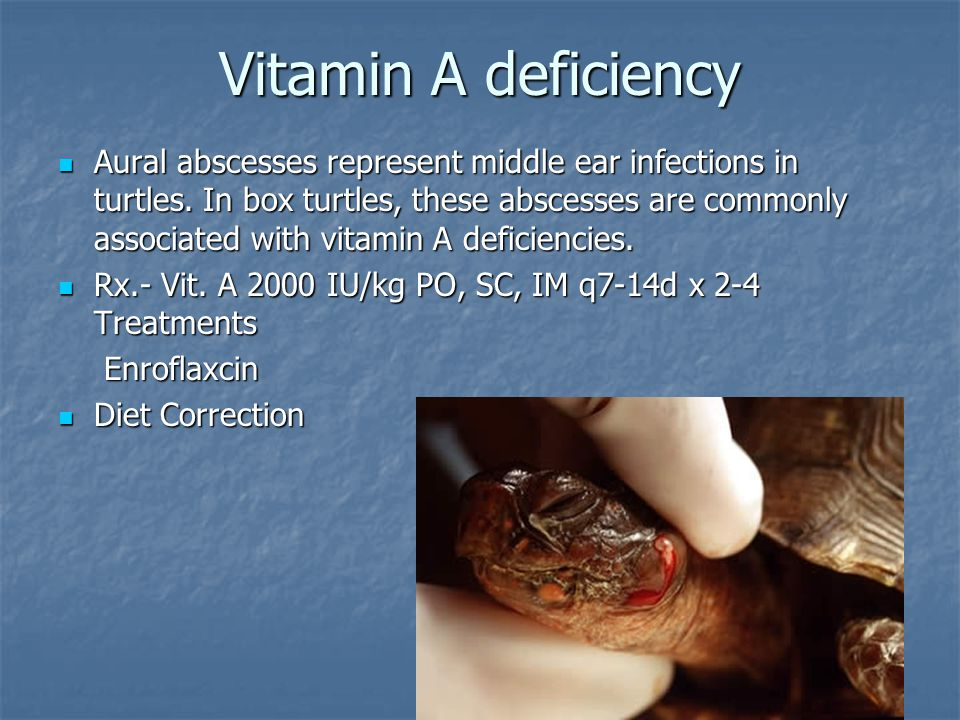 Vitamin A deficiency Aural abscesses represent middle ear infections in turtles. In box turtles, these abscesses are commonly associated with vitamin