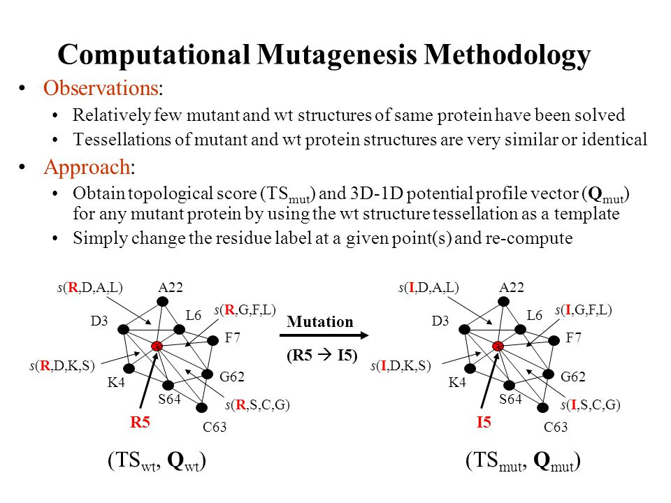 Computational Mutagenesis Methodology Observations: Relatively few mutant and wt structures of same protein have been solved Tessellations of mutant a