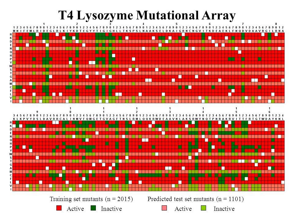 T4 Lysozyme Mutational Array Training set mutants (n = 2015) ActiveInactive Predicted test set mutants (n = 1101) ActiveInactive