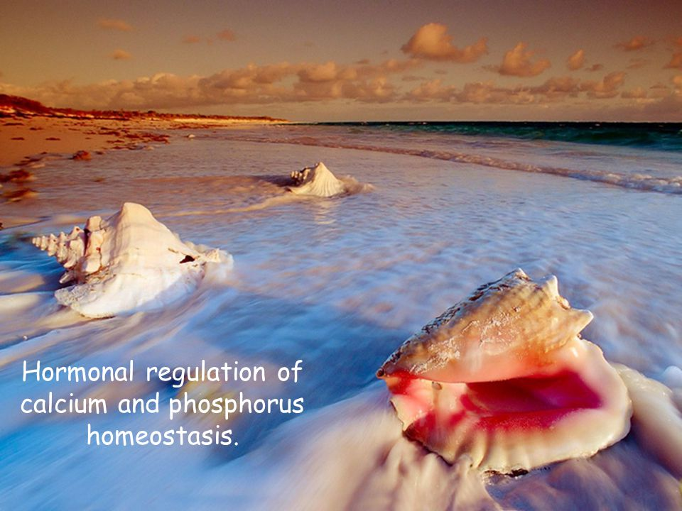 Calcium Regulate neuromuscular excitability Blood coagulation Secretory processes Membrane integrity Plasma membrane transport Enzyme reactions Release of hormones and neurotransmitters Bone mineralization