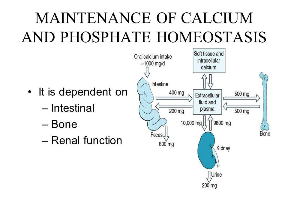MAINTENANCE OF CALCIUM AND PHOSPHATE HOMEOSTASIS It is dependent on –Intestinal –Bone –Renal function