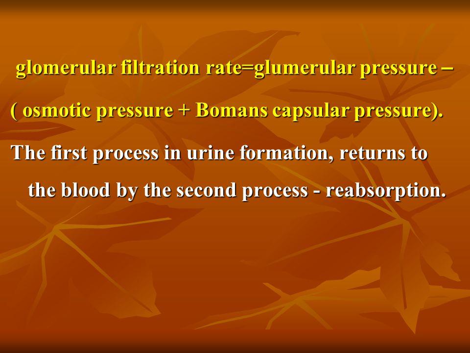glomerular filtration rate=glumerular pressure – glomerular filtration rate=glumerular pressure – ( osmotic pressure + Bomans capsular pressure). The