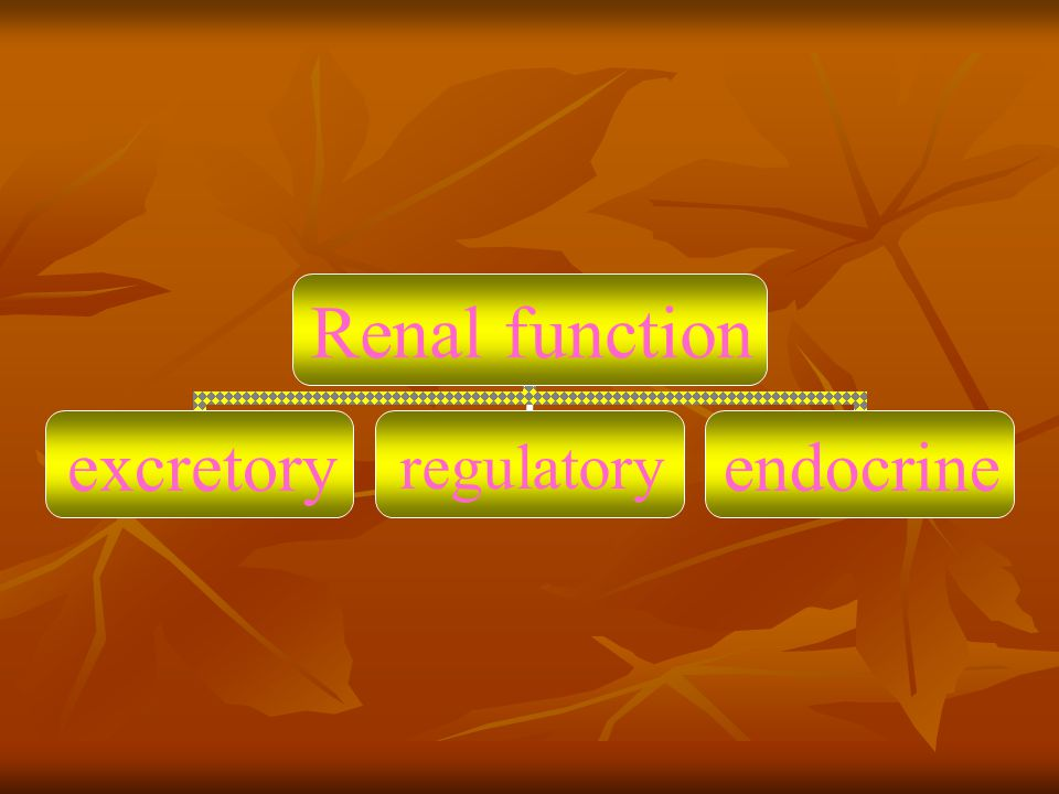 Renal function excretoryregulatoryendocrine