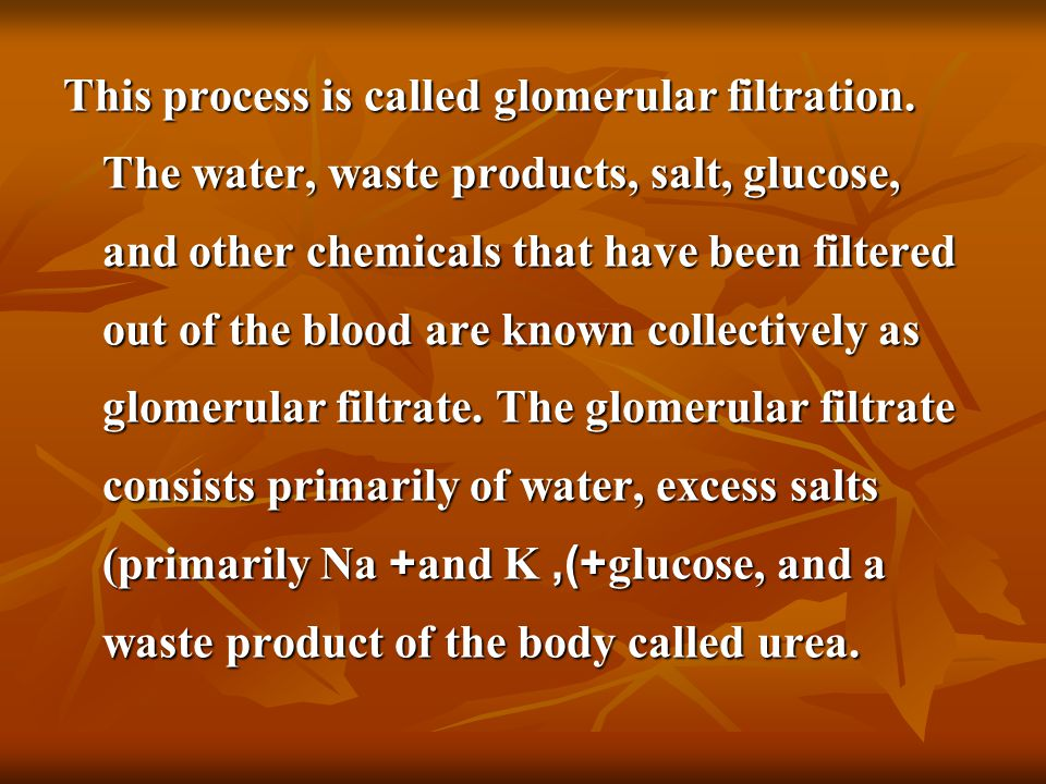 This process is called glomerular filtration. The water, waste products, salt, glucose, and other chemicals that have been filtered out of the blood a